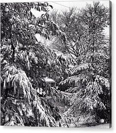 Acrylic Print featuring the photograph In Winter by Toni Martsoukos