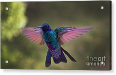 In Your Face Buddy Acrylic Print