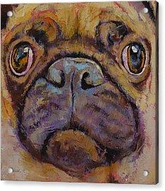 Pug Acrylic Print by Michael Creese