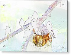 Inca Terns Acrylic Print