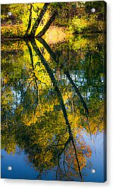 Incredible Colors Acrylic Print