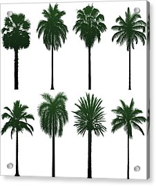 Incredibly Detailed Palm Trees Acrylic Print by Leontura