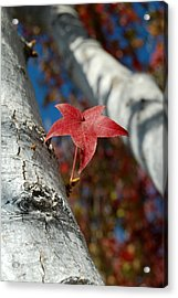 Independent Growth Acrylic Print by Jean Booth