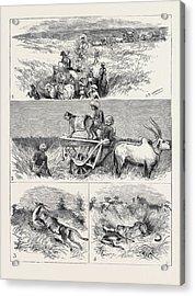 India, Hunting Black Buck With The Cheetah In Baroda 1 Acrylic Print by Indian School