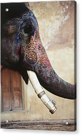 India, Rajasthan, Amber, Amer Fort Acrylic Print