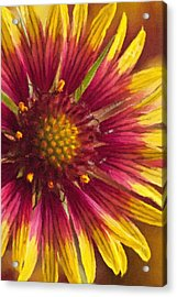 Indian Blanket Acrylic Print
