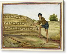 Indian Brickmaker Acrylic Print by British Library