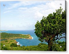Indian Creek Point, Antigua, West Indies Acrylic Print by Nico Tondini