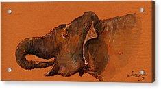 Indian Elephant Acrylic Print