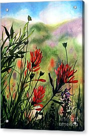 Indian Paint Brush Acrylic Print by Barbara Jewell