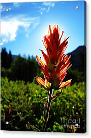 Acrylic Print featuring the photograph Indian Paintbrush Sunrise by Kate Avery