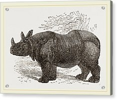 Indian Rhinoceros Acrylic Print by Litz Collection