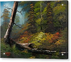 Secluded Forest Acrylic Print by C Steele
