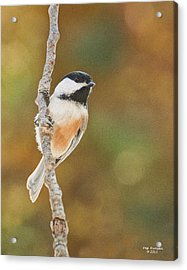 Indian Summer Chickadee Acrylic Print