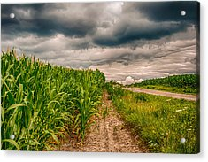 Indiana - Corn Country Acrylic Print