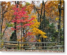 Indiana Fall Color Acrylic Print