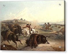 Indians Hunting The Bison Acrylic Print by Karl Bodmer