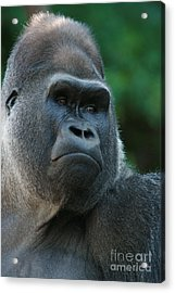 Acrylic Print featuring the photograph Indifference by Judy Whitton