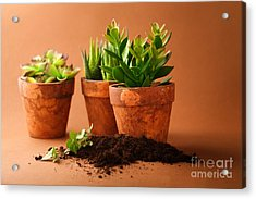 Indoor Plant Acrylic Print by Boon Mee
