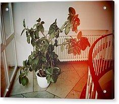 Indoor Plant Standing In The Hallway Acrylic Print