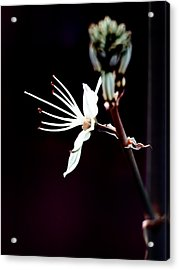 infrared Asphodel Acrylic Print by Stelios Kleanthous
