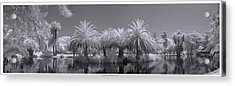 Infrared On A Sunny Afternoon Acrylic Print