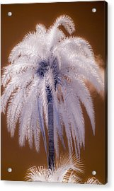 Infrared Palm Tree Acrylic Print