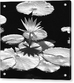 Infrared - Water Lily 02 Acrylic Print