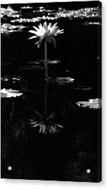 Infrared - Water Lily 03 Acrylic Print