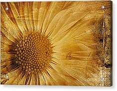 Infusion Acrylic Print by John Edwards