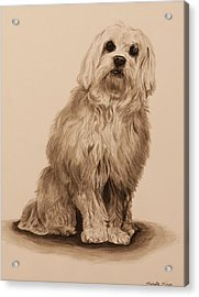 Ink Dog Acrylic Print by Michelle Miron-Rebbe