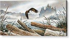Inland Sea Eagle Acrylic Print by James Williamson