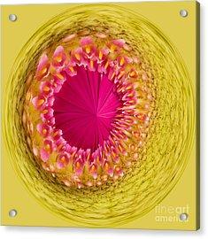 Inner Gerbera Acrylic Print by Anne Gilbert