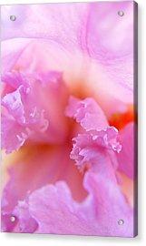 Inner Iris-2of4 Acrylic Print