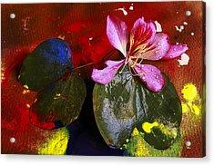 Inner Joy Acrylic Print by Rohan Sandhir