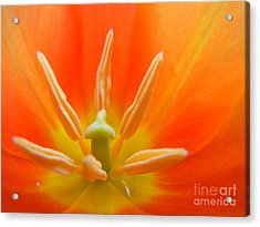Inner Light Acrylic Print