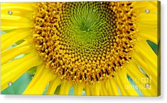 Inner Peace Forms Within This Sweet Yellow Sunflower Acrylic Print by Eunice Miller