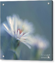 Innocence 03c Acrylic Print by Variance Collections