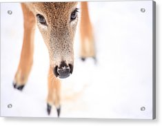 Innocent Eyes Acrylic Print