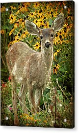Acrylic Print featuring the photograph Innocent Fawn And Flowers by Peggy Collins