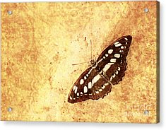 Insect Study Number 66 Acrylic Print by Floyd Menezes