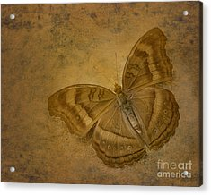 Insect Study Number 94 Acrylic Print by Floyd Menezes