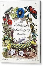 Insecten-belustigung Acrylic Print