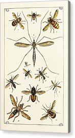 Insects Acrylic Print