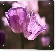 Inseparable Acrylic Print by Rona Black