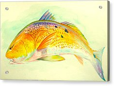 Inshore Gold  Acrylic Print by Yusniel Santos