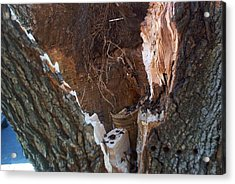 Acrylic Print featuring the photograph Inside A Bradford Pear Tree by Emmy Marie Vickers