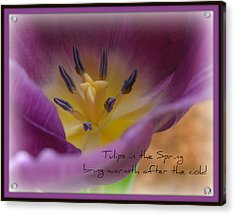 Acrylic Print featuring the photograph Inside A Tulip by Heidi Manly
