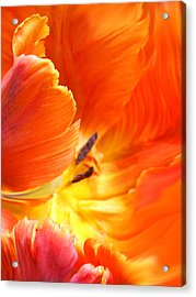 Acrylic Print featuring the photograph Inside Her Journey by The Art Of Marilyn Ridoutt-Greene