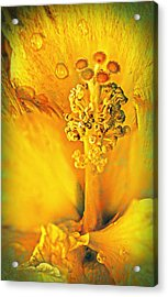 Inside The Hibiscus Acrylic Print